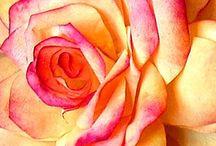 Paper flowers / Love metal n paper art