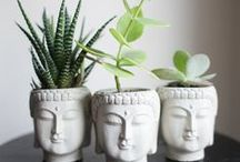 zen ideas