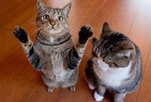 maru & hana / I love mugumogu's cats ! via 私信 まるです。 ( shi-shin marudesu. )   http://sisinmaru.com/