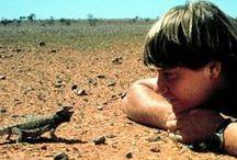 Steve Irwin / by Ondy