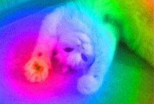 Ah ... ! / funny cute photos, gifs, etc.