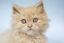 Cute ! vol.3 / cats & more, cute 500 photos & gifs.