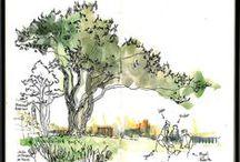 Trees / Tree Paintings