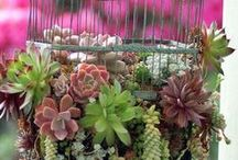 Succulent Ideas We Love / We love succulents! You can plant them in so many ways and the colors and shapes are amazing!
