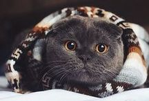 Cute ! vol.4 / cats & more, cute photos & gifs.