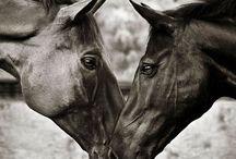 horses / by Catherine Ducluzeau