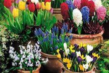 Gardening, Plants, Pots, & Landscaping / by Pamela Gardner