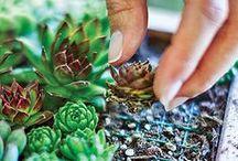 Home plants / Cacti, succulents, home plants