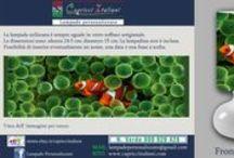 Acquari / Lampade da Tavolo in vetro soffiato a bocca con l'immagine desiderata di un acquario. E' possibile inviare la foto desiderata o scegliere tra quelle proposte. www.capricciitaliani.com