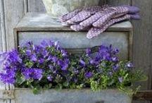 Garden DIY  / Creative!