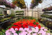 Our Farm in Minnesota / Get to know Costa Farm & Greenhouse