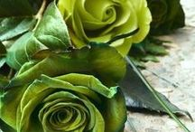Green,Emerald,Mint