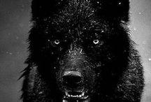 DARK PHOTOGRAPHY / Inspire darkness photography