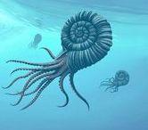 Prehistorical Sea Creatures