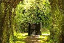 my secret garden / by Rhiannon Duffy