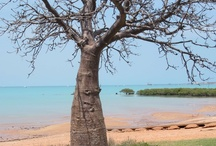Broome, Western Australia / A fabulous place to holiday, the pearling town of Broome sits on the edge of Roebuck Bay in the Kimberley region of Western Australia.