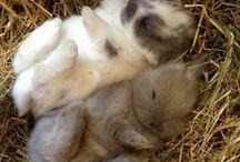 Furry Babies!
