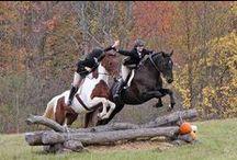 Beauties / i love horses