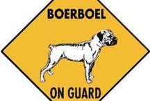 Boerboel's
