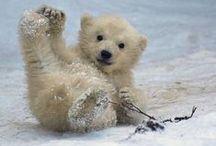 Oh, so cute! / Something I find very cute. :3