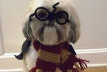 Halloween Pets! / Pets in ridiculously cute and funny Halloween costumes!