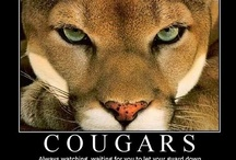 Cougars: Two- and Four-Legged!