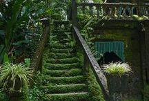 Overgrown-evergreen-lost