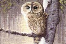 Borduren Uilen ( en andere vogels)