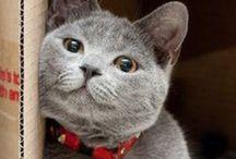 Catz / Cute kitties