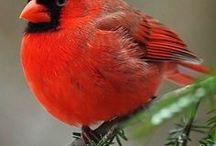 Nature 20 - Birds III - Parrots, toucans,cardinal, kingfisher
