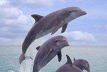 Nature - Sea - big fish - sharks, dolphins, whales, killer whales, walruses, seals, stingrays