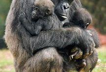 Nature 17 - primates, monkeys, smaller bear, kangaroo, all other