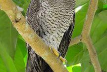 Nature 18 - Bird - big bird and predators