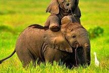 Nature 9 - big animal I - elephant, giraffe, rhino, hippo
