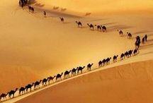 Nature 6 - desert