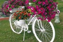 Nature - flower and bike