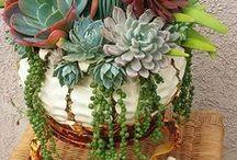 Nature - Cactus and succulents, bonsai