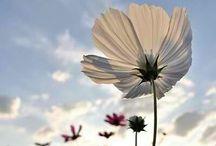 Flowers/Bloemen