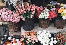 Flowers. / Flores e decoração.