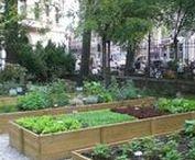 Horta | Vegetable garden.