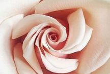 The Rose & Butterfly / Roses, Butterflies, and lovely gardens to bring peace and joy to your day.