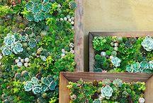 Viherseiniä | Living walls / Seiniä peittävää vihreyttä - köynnöksiä ja viherseiniä! Vertical Greenery in Gardens and Cities!