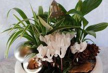 X-mas Plants & Flowers / Kompozycje zimowo-bozonarodzeniowe z kwiatow cietych i doniczkowych wykonane przez Kwiaciarnie KAJA