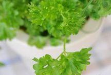 Yrttejä ikkunalla | Herbs / 5 helppoa yrttiä ikkunalaudalle |5 Herbs that Thrive Indoors