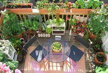 Hangulatos erkélyek /  Az erkélyt sokan tárolásra használják, vagy a mosott ruhák szárítására. De kis idő ráfordítással és némi növényzettel igazán meghitt, hangulatos hellyé alakíthatjuk.
