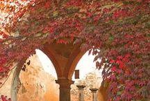 Autumn and Fall Foliage .. / Vi aspetto , anche a Tavola ! facebook.com/jennyappuntidiviaggio