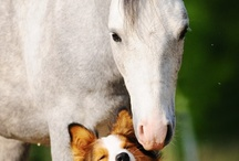 the love of animals
