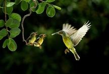 Nature & Wildlife photograph