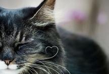 Little Balls of Fur / Soft kitty, warm kitty, little ball of fur / Happy kitty, sleepy kitty, purr purr purr
