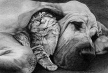 Teneri animali / Il miglior amico dell'uomo. / by Mauro Grasso
